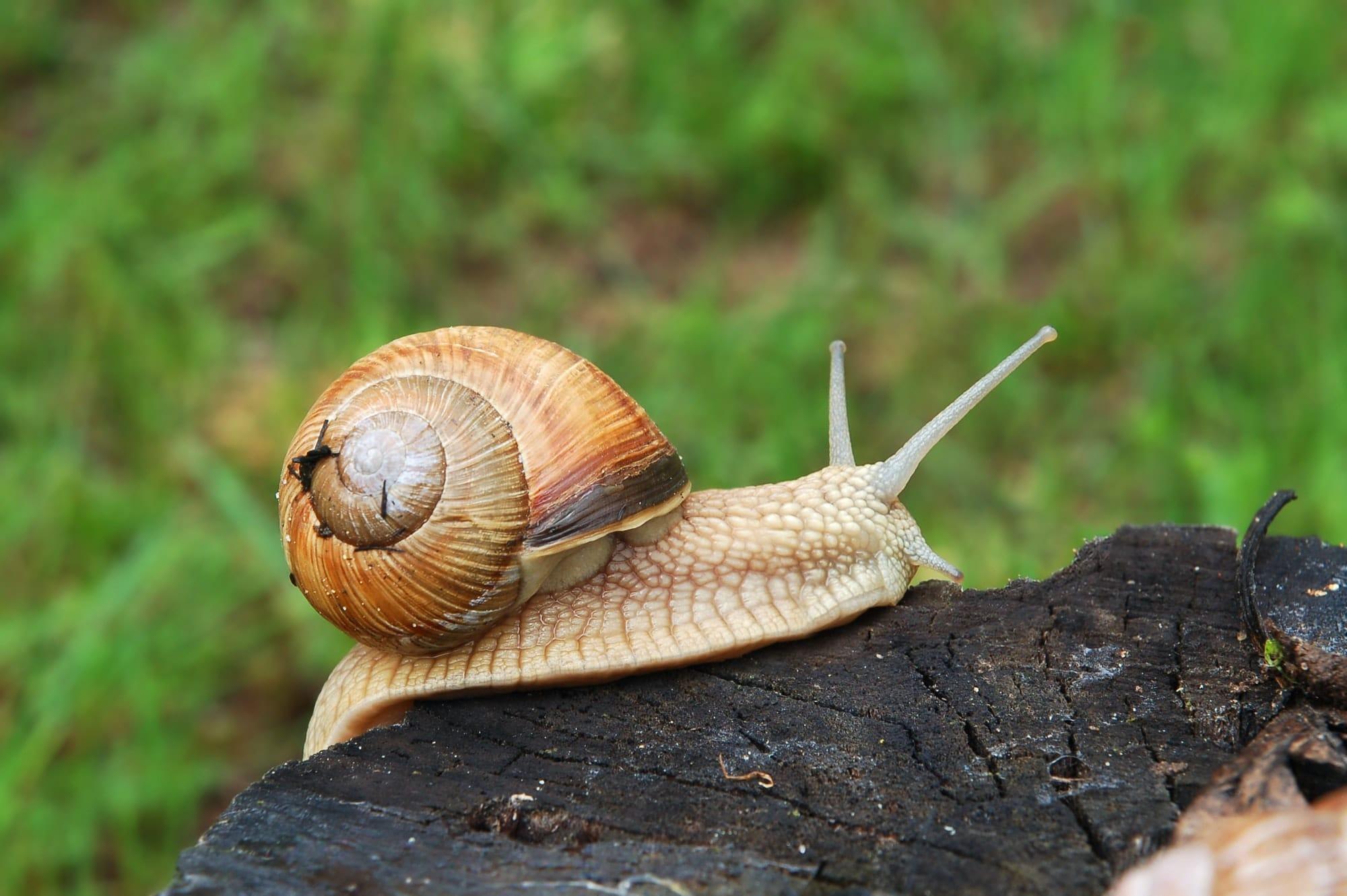 escargot insecticide bio