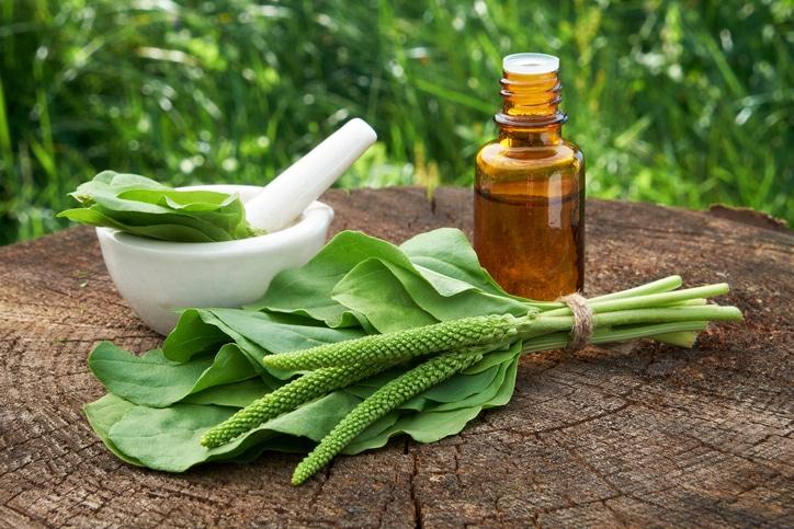 herbe-sante-anform-plantain-plantago-major