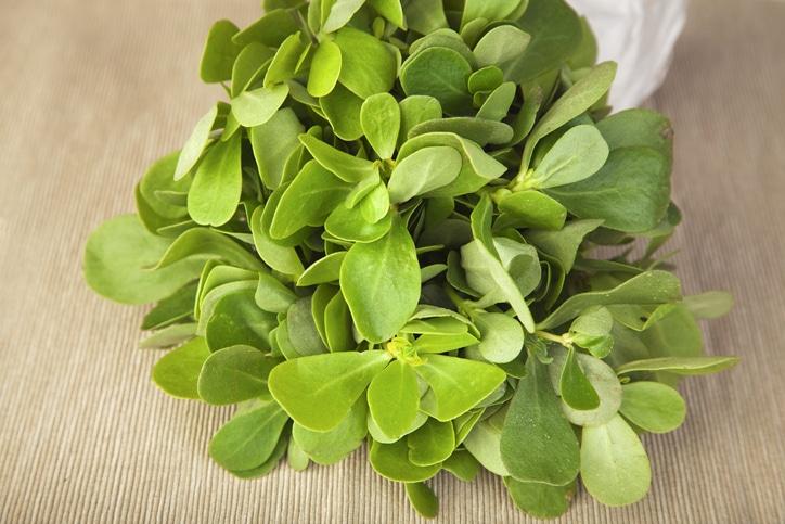 herbe-sante-anform-pourpier-portulaca-oleracea
