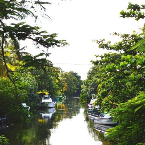 Les plantes médicinales de la mangrove anform magazine sante