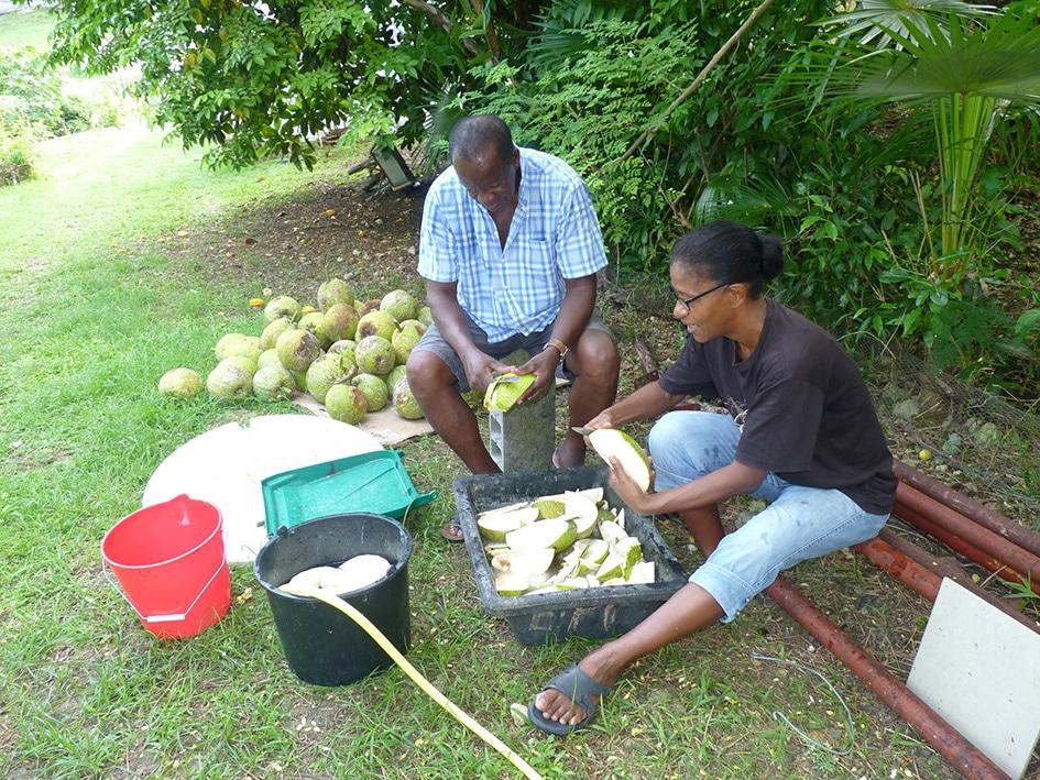 Épluchage des fruits à pain